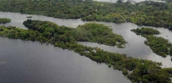 83% da população brasileira está insatisfeita com a preservação da Amazônia, diz Febraban