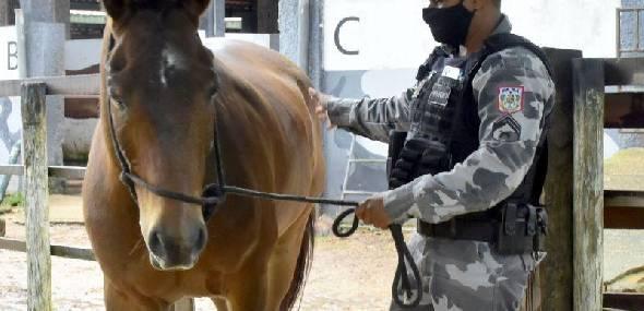 Animais recebem cuidados e auxiliam no combate a criminalidade no Pará