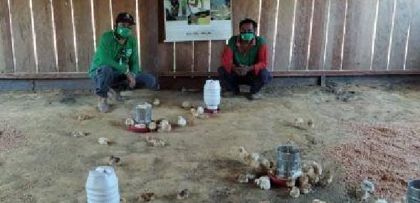 Indígenas de Jacareacanga recebem apoio da Emater para criação de frangos