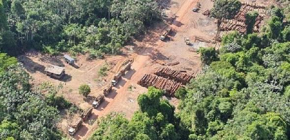Juiz do PA aplica multa milionária a policiais federais envolvidos em mega apreensão de madeira no Pará