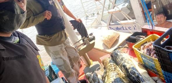 Mais de 200 kg de carne de jacaré são apreendidos em barco pesqueiro no Pará